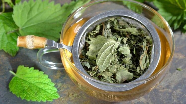 Isırgan otu çayı nasıl yapılır, faydaları neler?