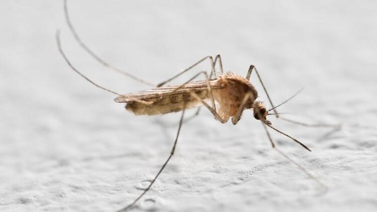 Batı Nil Virüsü ile ilgili bilim insanlarından çarpıcı araştırma