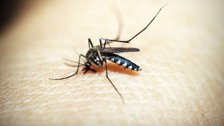 Bu yöntemle sivrisinekleri evinizden uzaklaştırın
