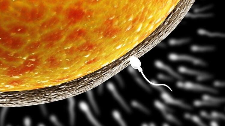 Sperm bozukluklarının tedavisinde önce doğru tanı konulmalı