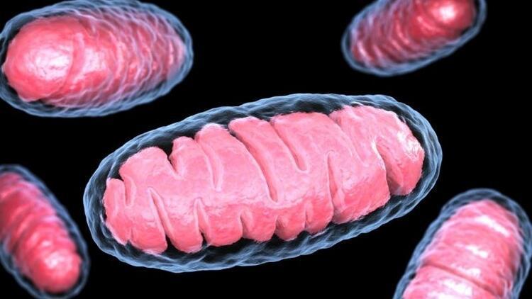 Tüp bebek tedavisinde mitokondri yöntemi nedir?