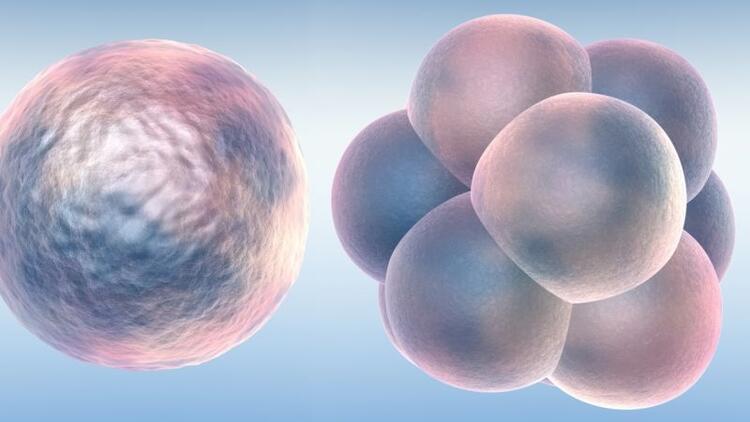Erken yumurtalık yaşlanmasını engellemek mümkün mü?
