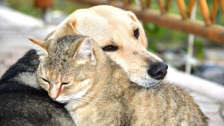 Hepsine kocaman alkış! Hayvanları Koruma Günü'ne özel kampanyalar