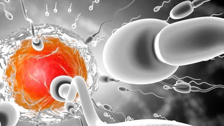 Erkekler de kariyer için sperm donduruyor