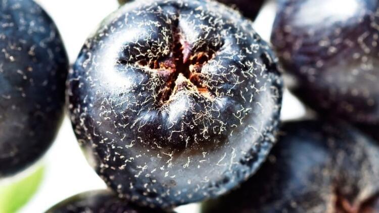 Aronya meyvesi nedir? Sağlığa faydaları nelerdir?