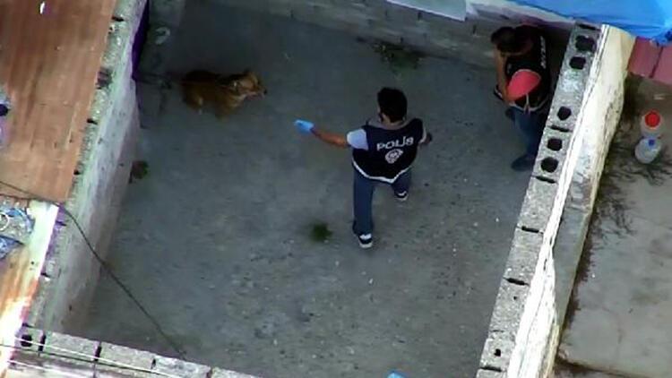 Suç örgütü operasyonunda polise köpek saldırdı