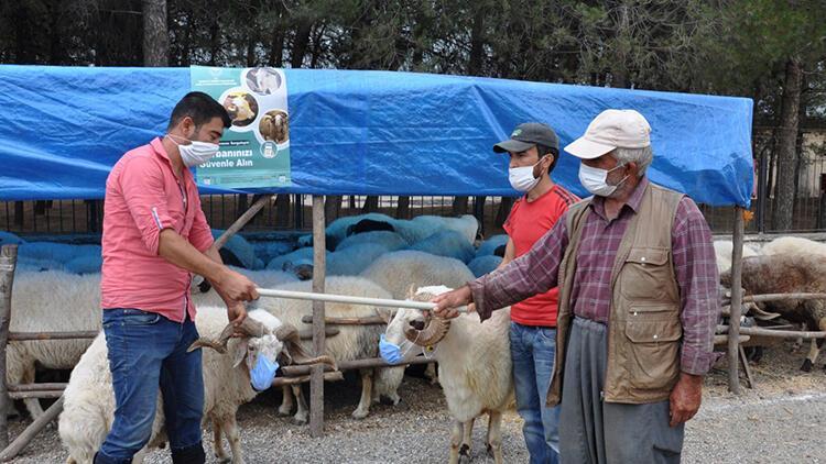 Salgına dikkat çekmek için pazarda koyunlarına maske taktı