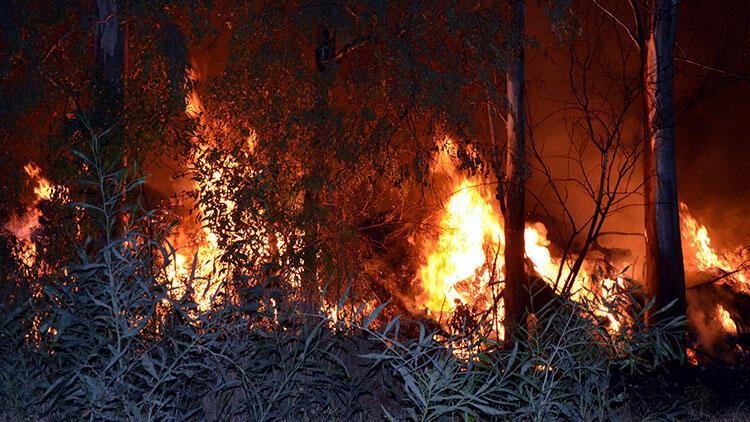 Antalya'da yangın! Sulama pompası ve ağaçlar zarar gördü