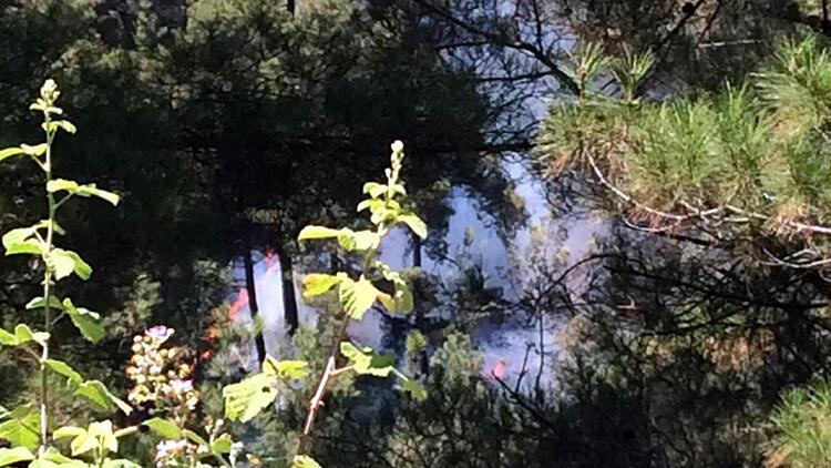 Adana'da orman yangını paniği