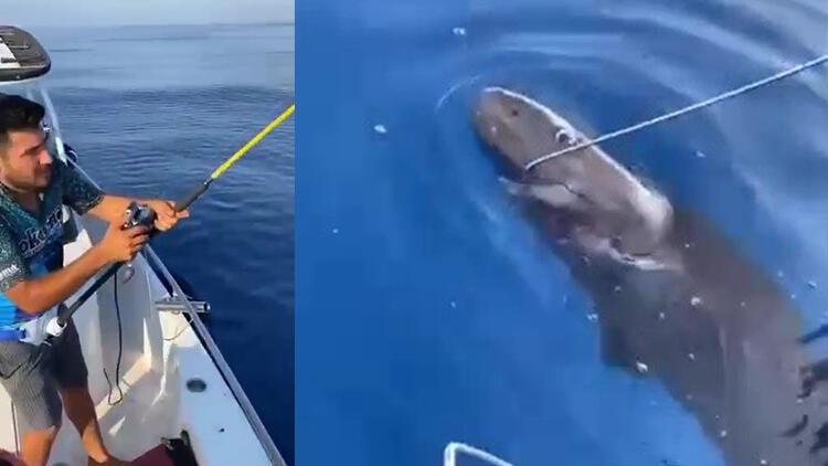 Balıkçıların oltasına takılan köpek balığı, kanca çıkartılarak serbest bırakıldı