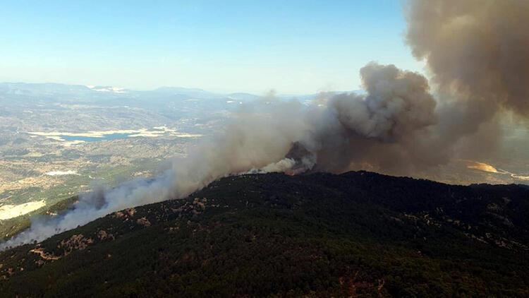 Son dakika haberi: Aydın'da ormanlık alanda yangın!