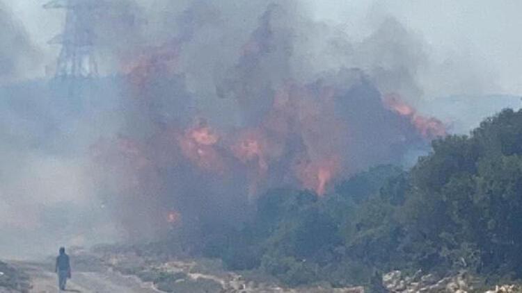 Son dakika... İzmir'de Seferihisar'da yangın