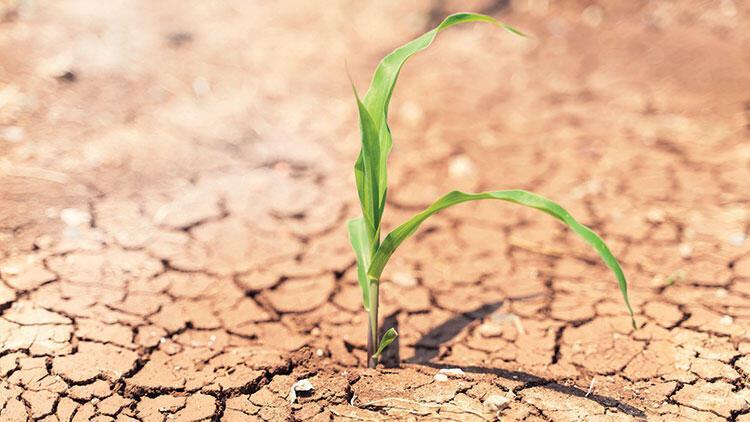 Bakanlıktan 'Yağışlar azalacak, verim düşecek' uyarısı... Tarımda kritik rapor