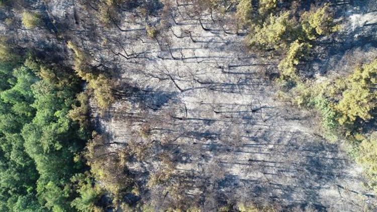 Bursa'da yanan 10 hektar ormanlık alan havadan görüntülendi