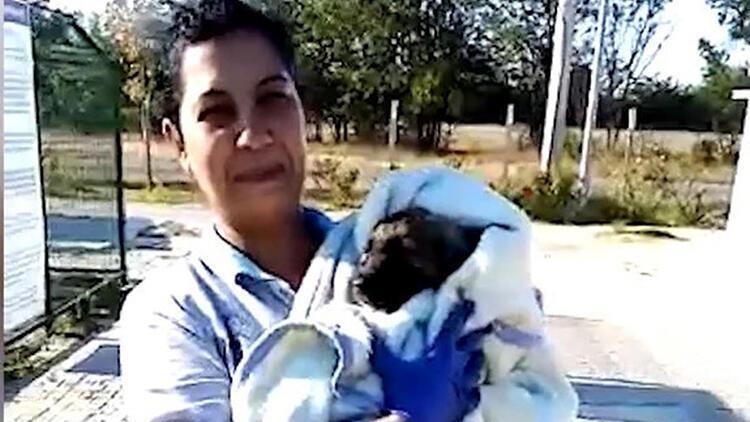 Zifte bulanan yavru köpeği kurtarıp, bakımını yaptılar