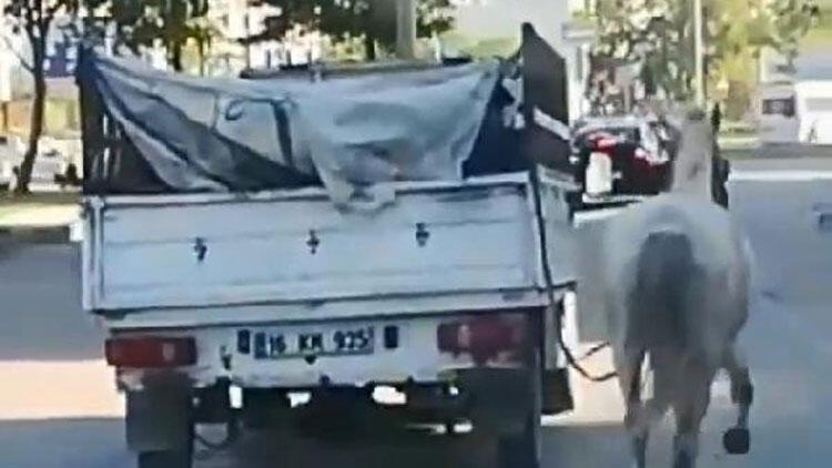 Atı kamyonetin arkasına bağlayıp koşturmuştu... Cezasız kalmadı!