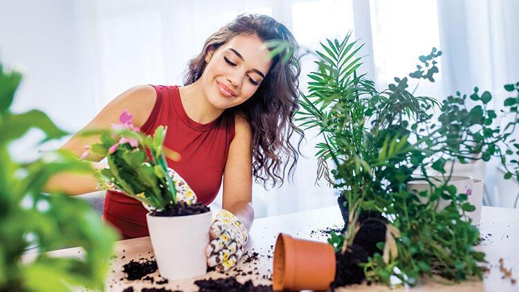 Evinizi botanik bahçesine dönüştürün