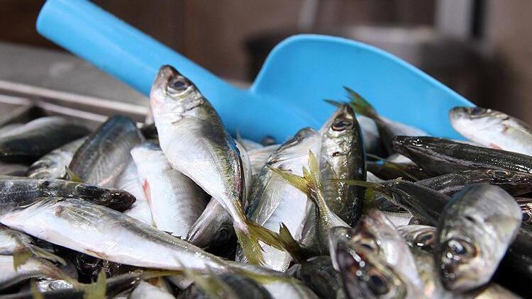 Çanakkale'de tezgahlar balıkla doldu