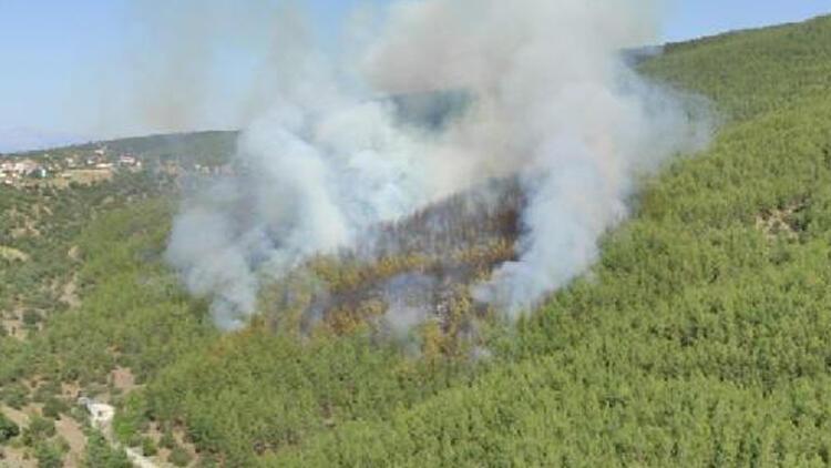 Son dakika haberler: Muğla'da orman yangını