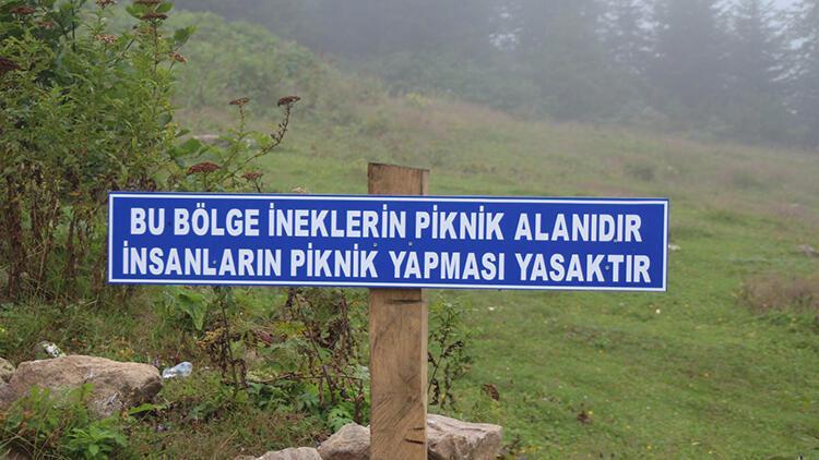 Yaylaya çöp bırakan piknikçilere tabelalı uyarı: Bu bölge ineklerin piknik alanıdır