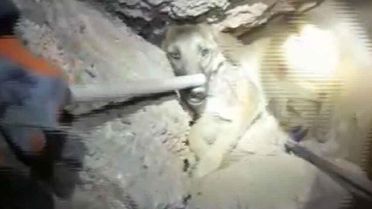 Kayalıklara sıkışan köpeği itfaiye kurtardı