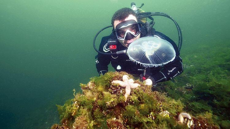 Ay denizanası uyarısı
