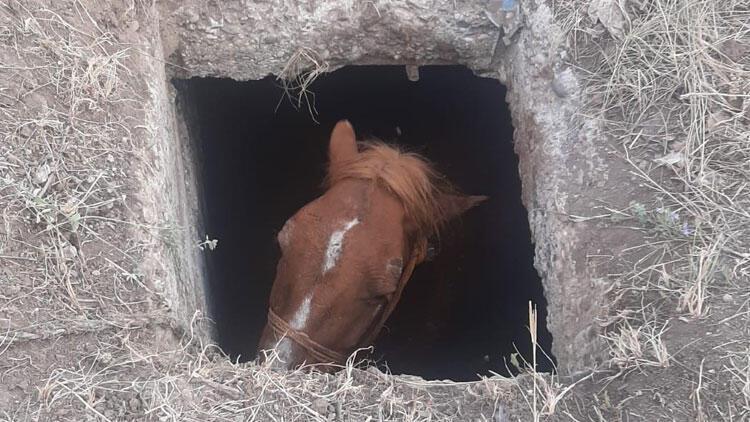 Rögar kuyusuna düşen at için seferber oldular