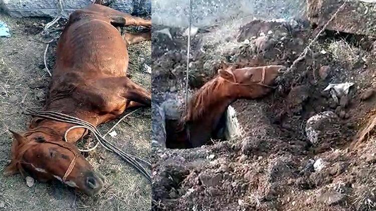 Rögar çukuruna düşen at, iş makinesiyle kurtarıldı