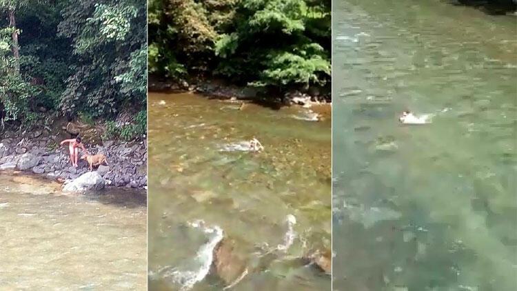 Küçük Alper, yavru köpeği yüzerek karşı kıyıya taşıdı