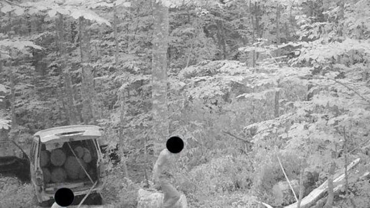 Kaçak ağaç keserken fotokapana yakalandı