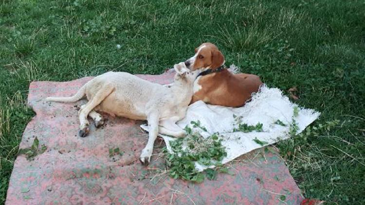 Köpekle kuzunun dostluğu