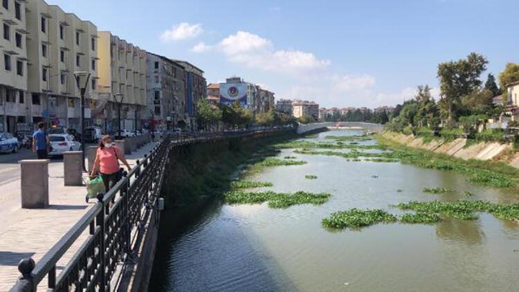 Asi Nehri'de su sümbülleri yine görülmeye başladı