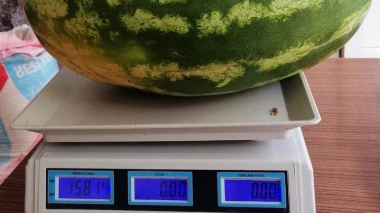 Görenler gözlerine inanamıyor! 1 tanesi 15 kilo, sırrı ise gübresi