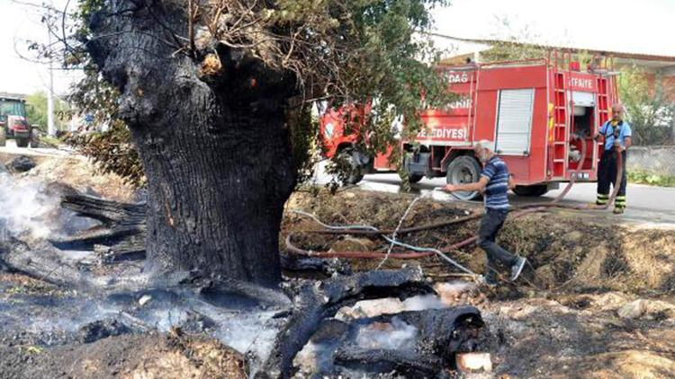 Tekirdağ'da otluk yangınında asırlık ağaç zarar gördü