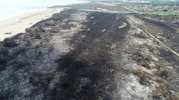 Kızılırmak Deltası Kuş Cenneti'ndeki yangında 2 bin dönüm alan zarar gördü