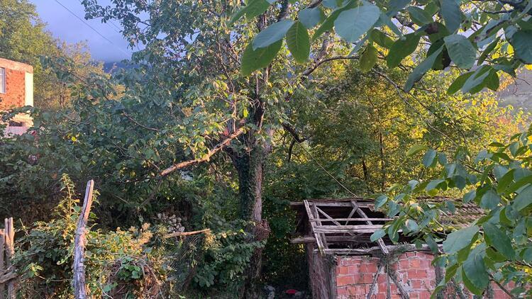 Ceviz toplamak için çıktığı ağaçtan düşüp, öldü