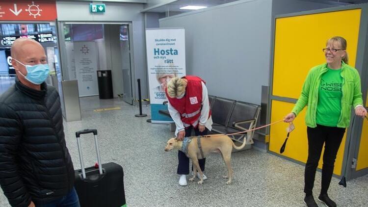Koronavirüs avcısı köpekler göreve başladı