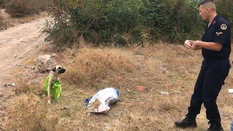 Vahşetin böylesi... Çanakkale'de tepki çeken olay!