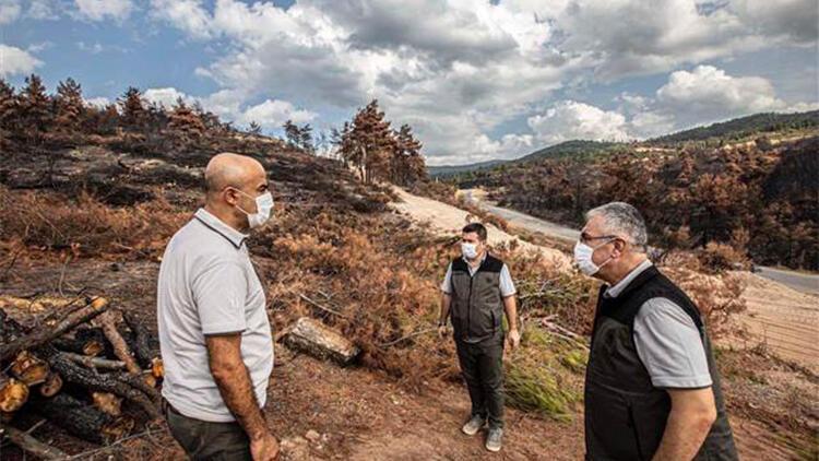Ahmetli'deki orman yangınında zarar gören alan, yeniden yeşillendirilecek