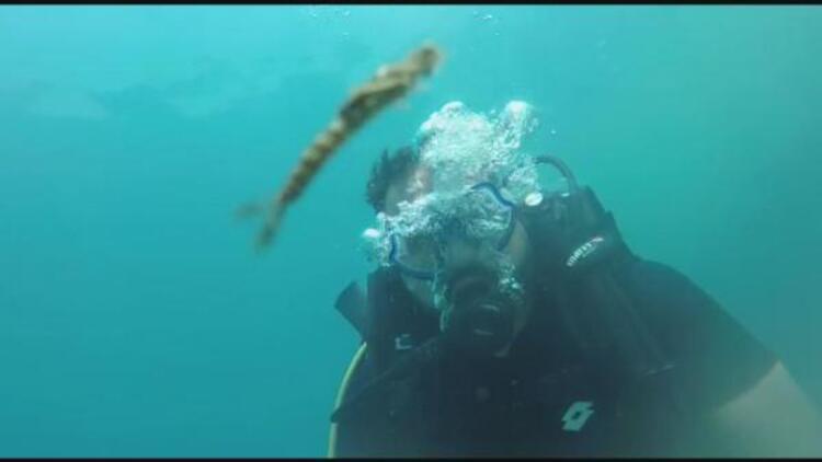 Van Gölü'nde yeni canlı türü bulundu