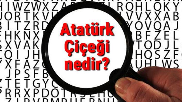 Atatürk Çiçeği nedir? Atatürk Çiçeği nasıl bakılır ve çoğaltılır? Atatürk Çiçeği bakımı, çeşitleri ve hastalıkları