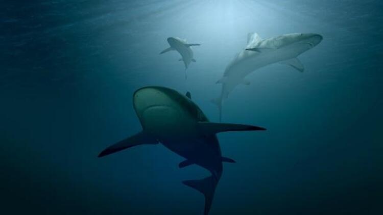 ABD'den koronavirüs aşısı açıklaması: Aşı için yarım milyon köpekbalığı katledilebilir!