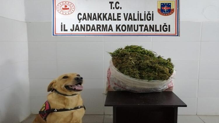 Biga'da uyuşturucu operasyonu: 1 gözaltı