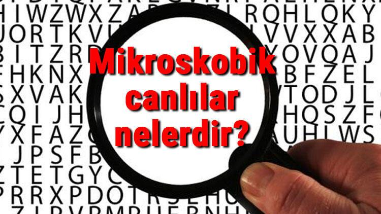Mikroskobik canlılar nelerdir Nerede yaşar ve solunum yapar mı Mikroskobik canlıların özellikleri ve faydaları