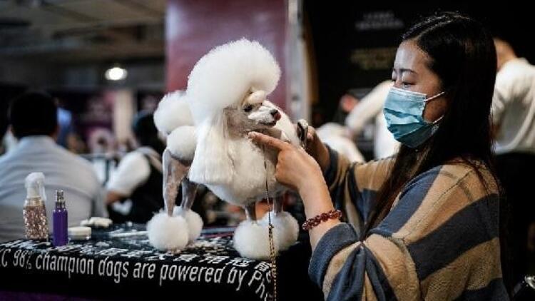 Salgının çıktığı Wuhan'da köpek güzellik yarışması