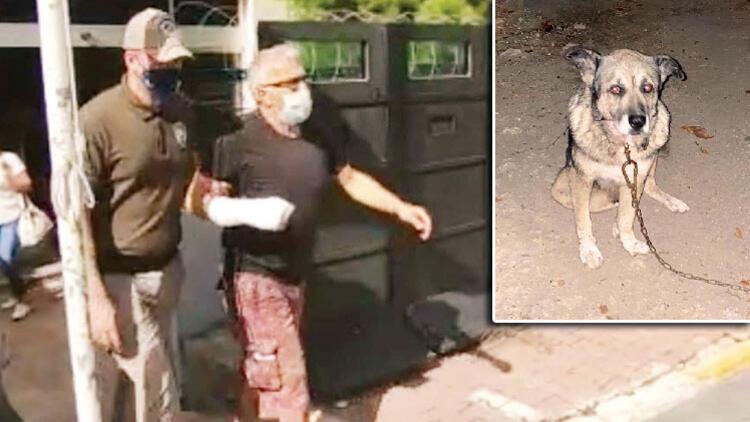 Son dakika haberi: Komşu dehşeti Köpek katili serbest