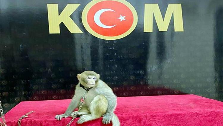 Araçta ele geçirilen maymun, korumaya alındı