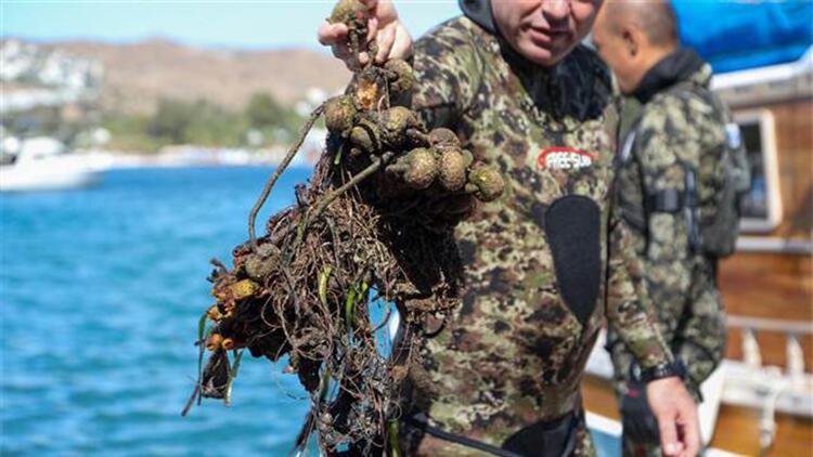 Bodrum'da deniz dibinden 257 kilogram katı atık çıkarıldı