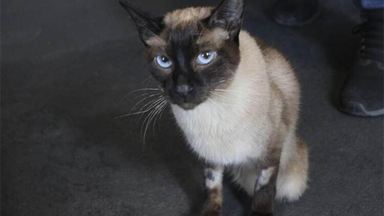 5nci kattan düşen kediye yanlış tedavi iddiasına suç duyurusu