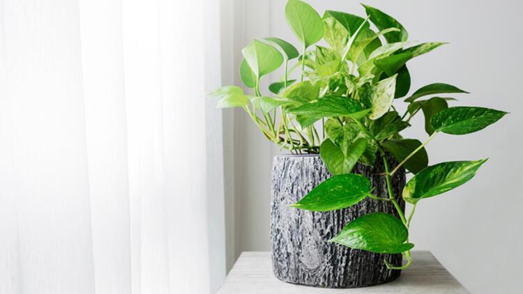 Ev bitkileri için pratik bakım ipuçları